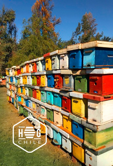 honey properties group chile