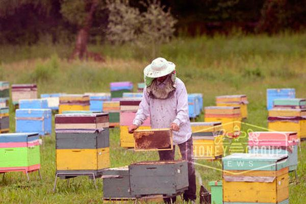 how farmers can help pollinators