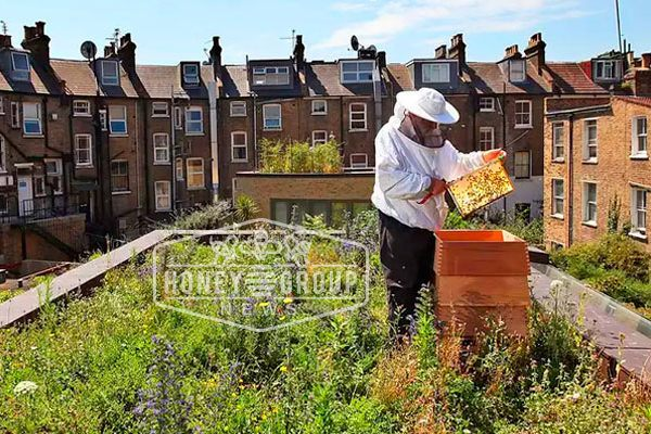 the urban beekeeping