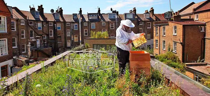 the urban beekeeping