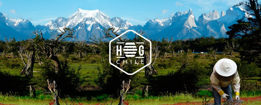 about honey group chile