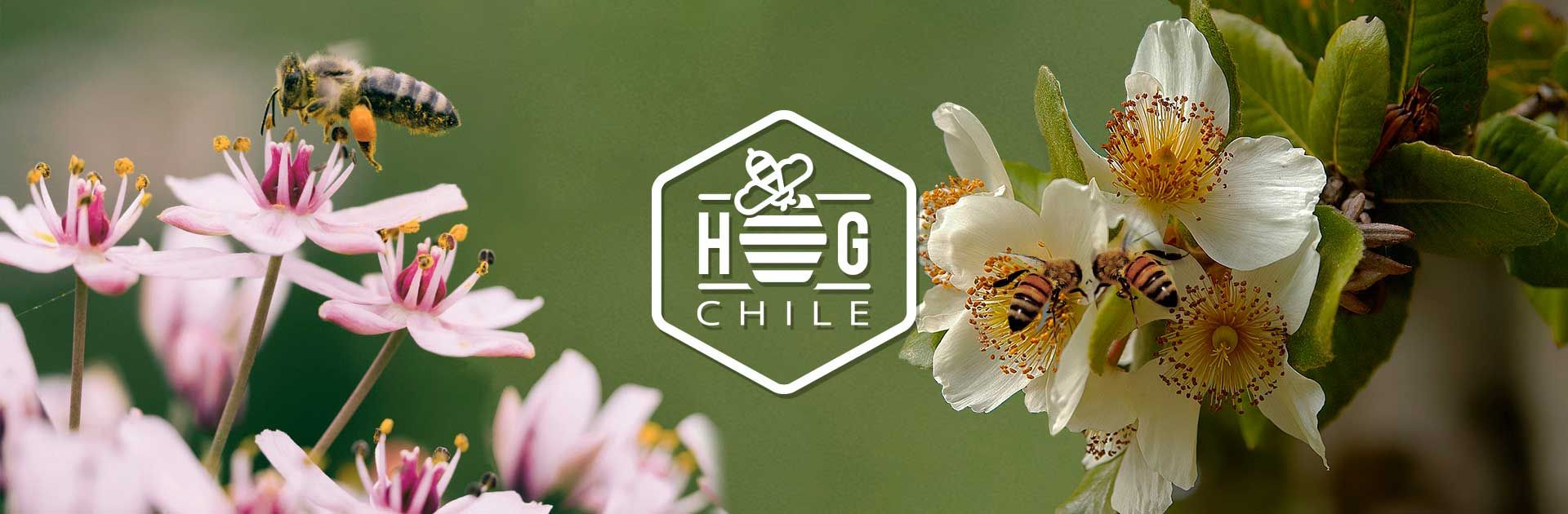 honey group chile