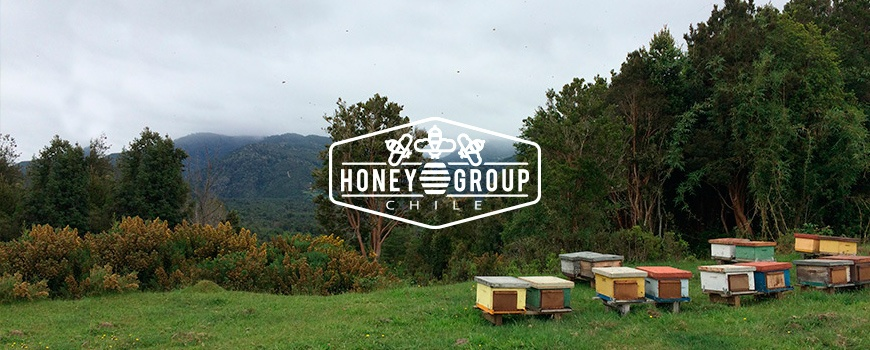 honey from group chile