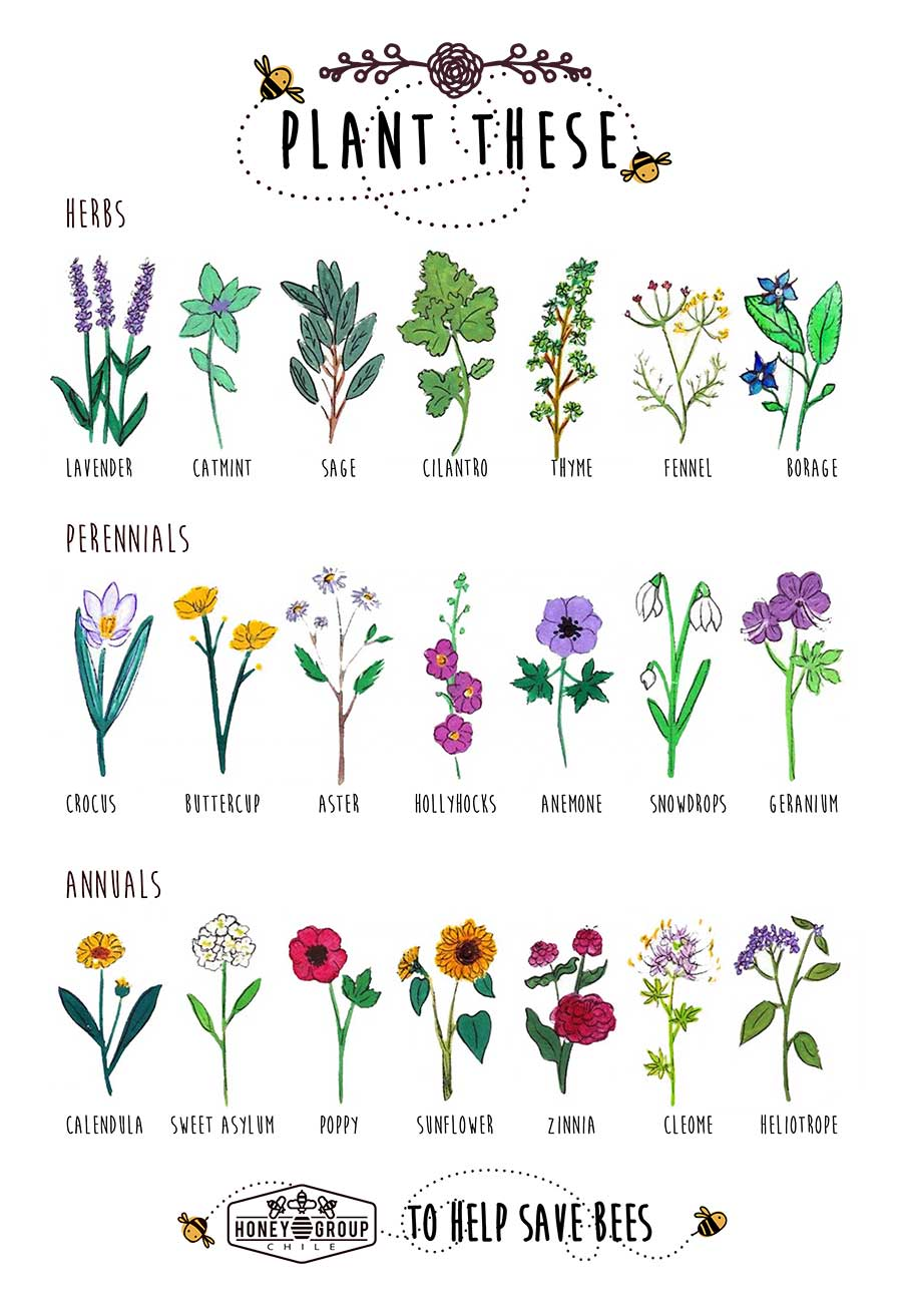 plant these herbs to help save bees